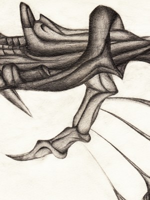Kralle Illustration Claw Drawing