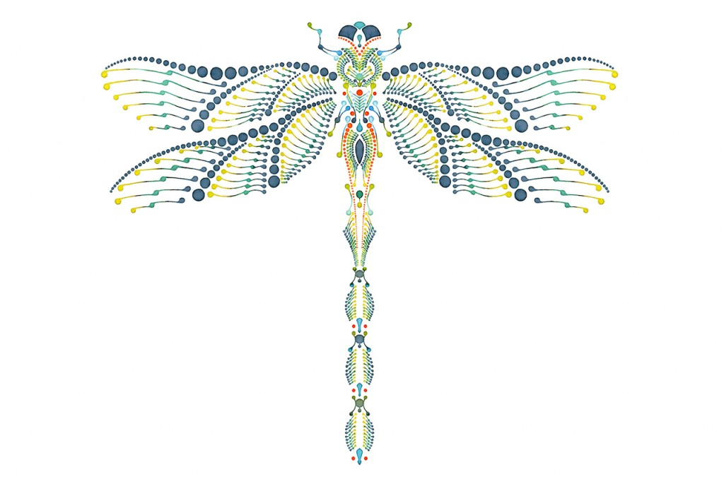 Dotting art - DRAGONFLY V1 – Watercolour on paper – Libelle Illustration